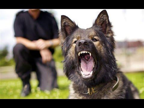 vigilancia perros